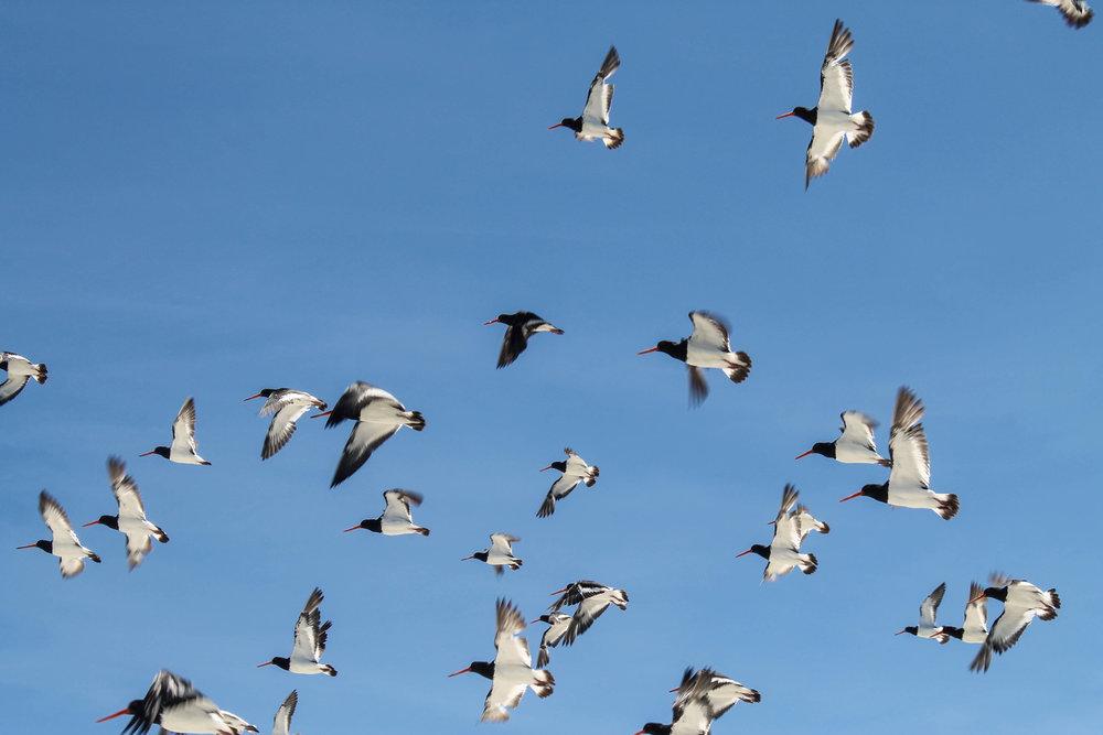 birds-nz-okura