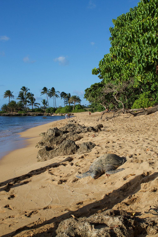 laniakea-beach.jpg