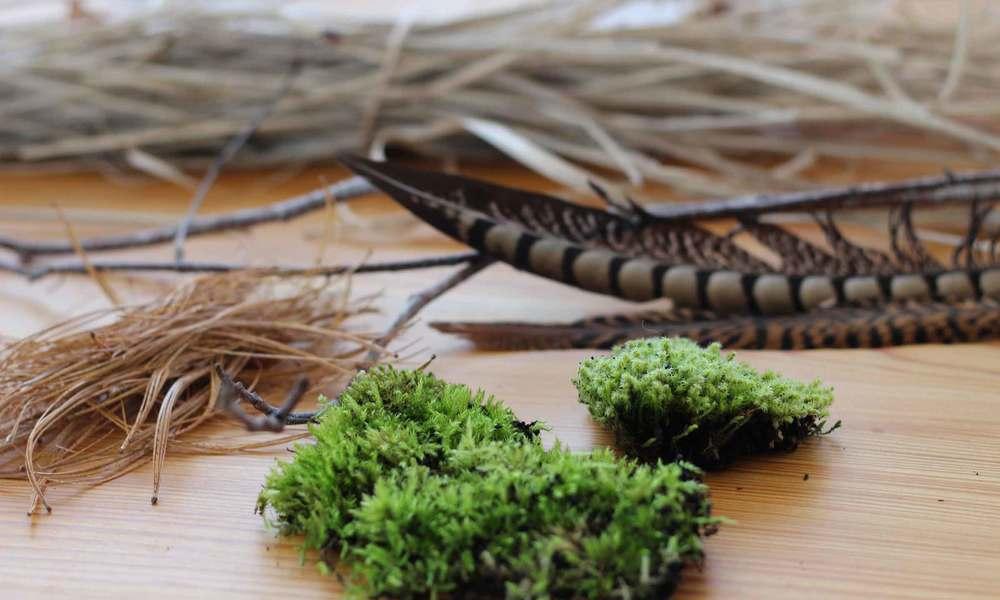 yard debris makes bird nest