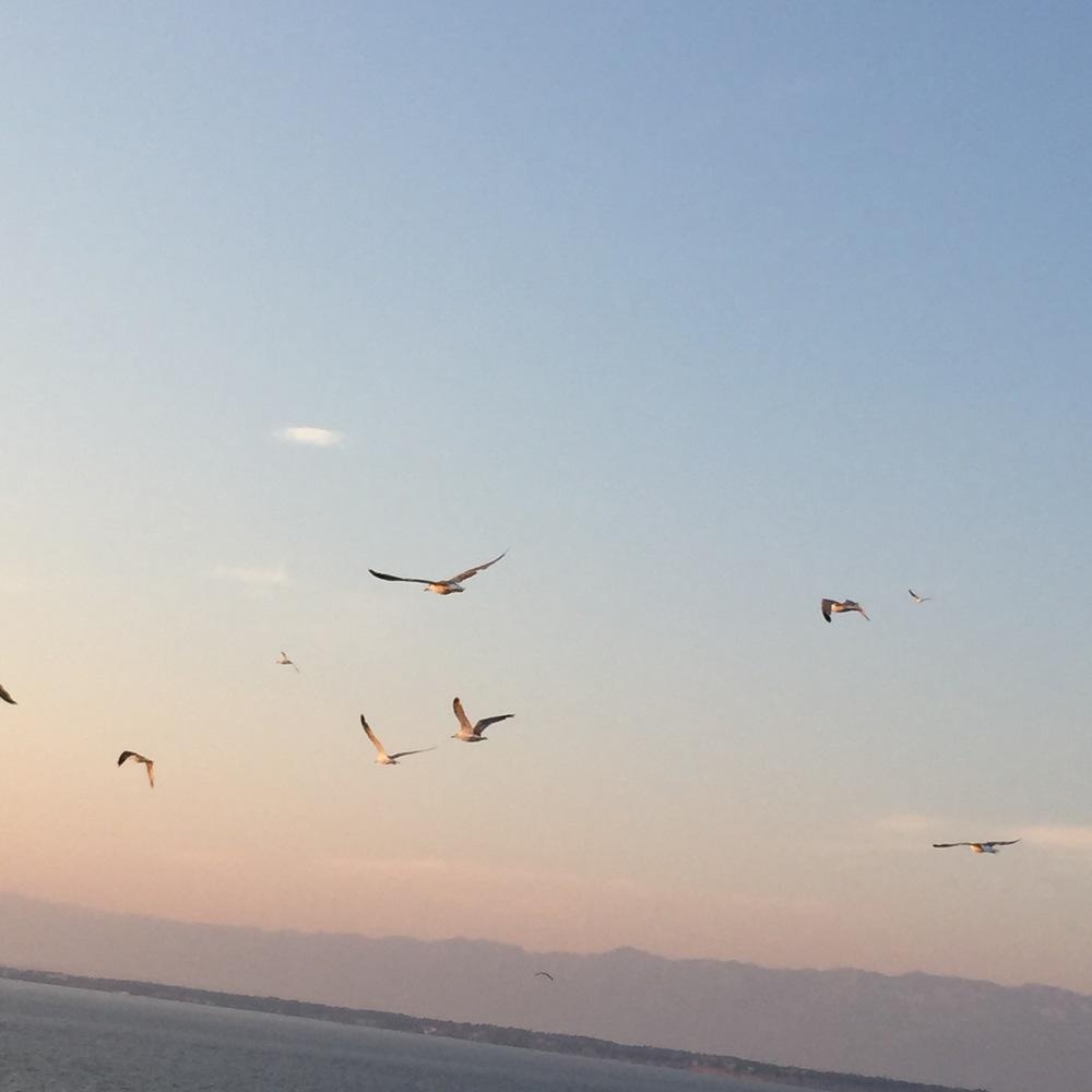 Adriatic Seagulls