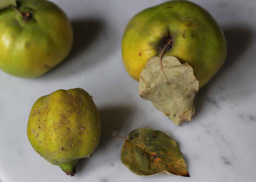 Quince, quince compote two ways, Thread & Whisk recipe, yum!
