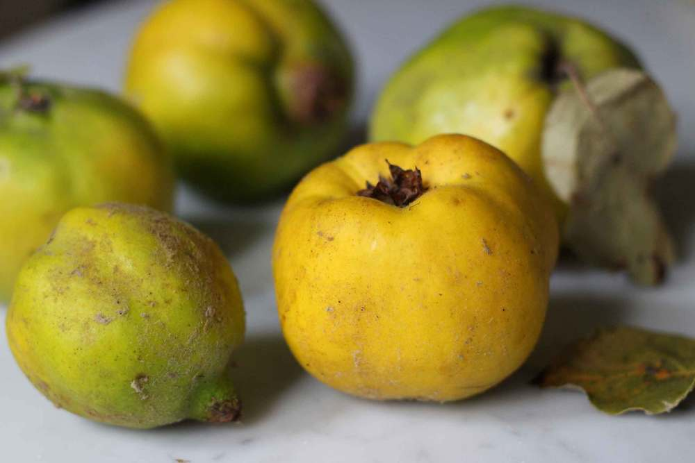 quince, compote recipes, sweet and savory, recipe by Thread & Whisk