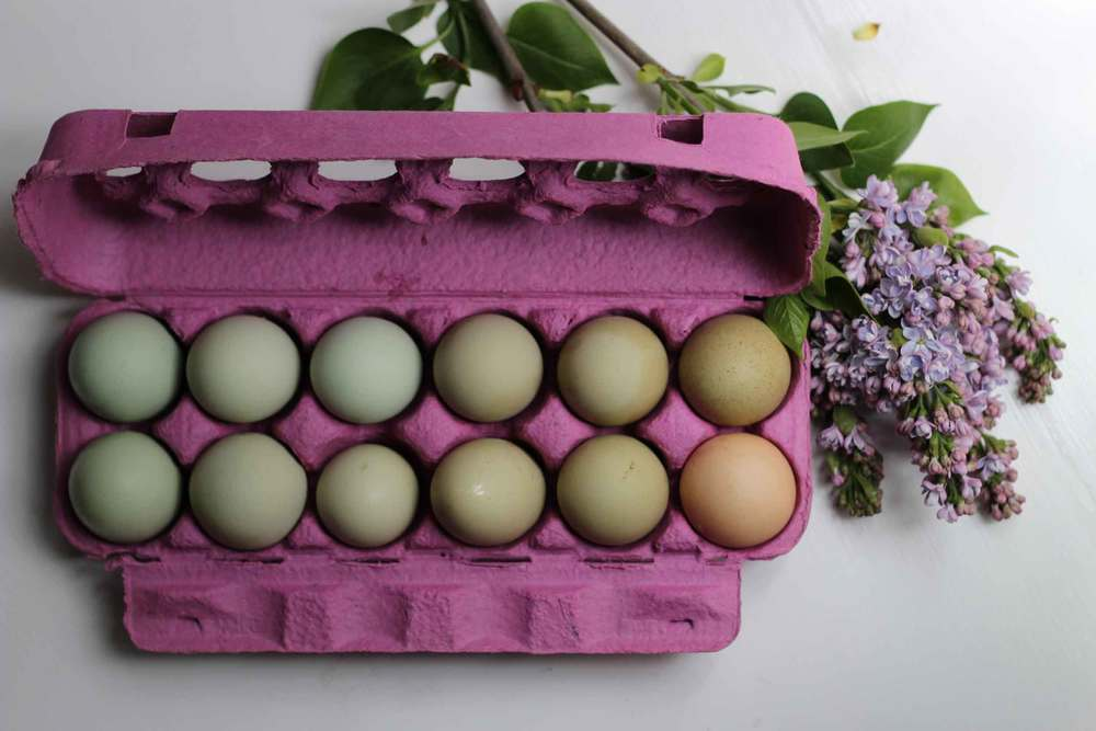 Ombre eggs, waiting to be blown out