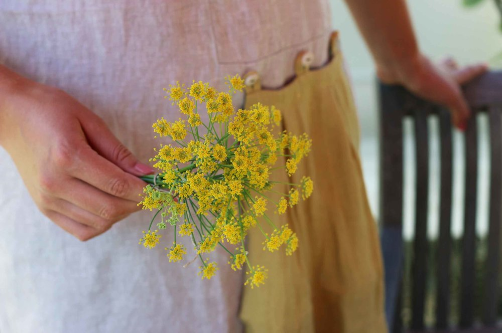 Fresh fennel flowers bundled for drying and harvesting pollen.  How-to and recipe at threadandwhisk.com.