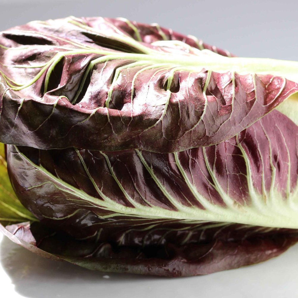 Treviso lettuce, a variety of radicchio