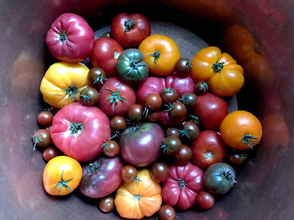 There is nothing better than a bowl of summer heirloom tomatoes. Well, unless you make them into a tomato sauce to enjoy during those long, dark winter months.  Now that is something to cherish.