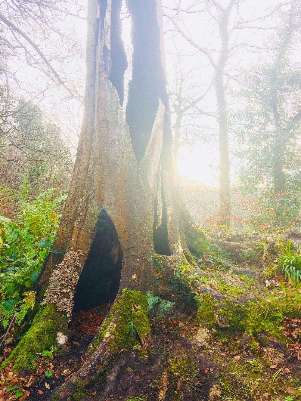 Spirit Tree in Roslin Glen, Scotland 2017