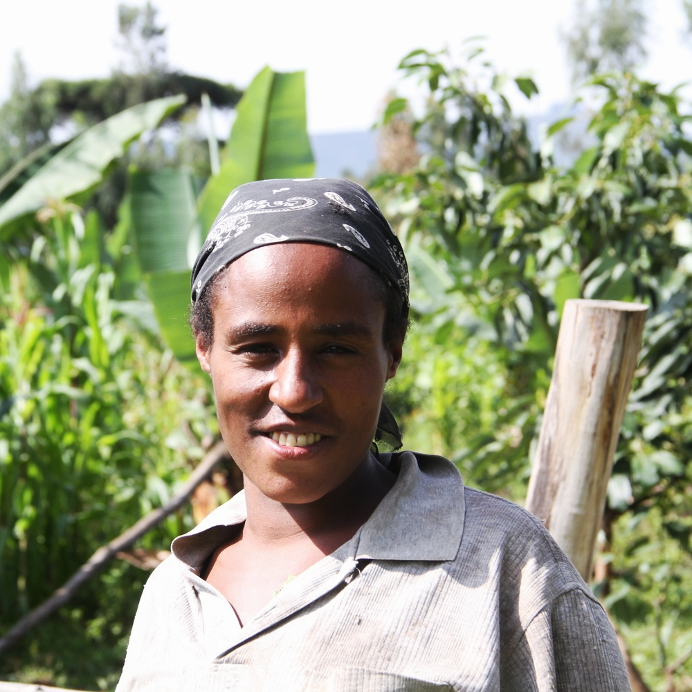 Hanna Mengistu and her husband have a family of 9, three of whom work on the farm. They currently have 70 avocado trees with 6 different varieties all of which they supply to GreenPath.