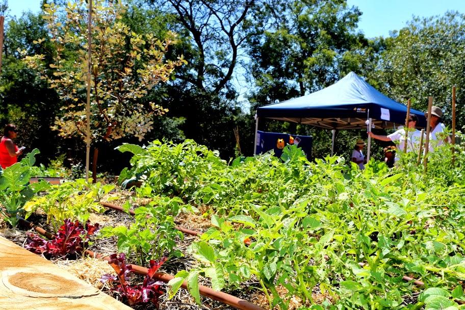 baringa-bush-community-garden.jpg