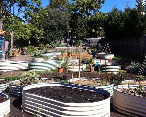 balgowlah-community-garden.jpg