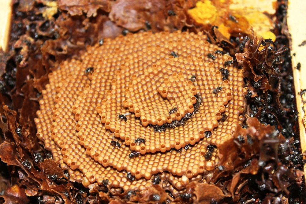 How to Harvest a Bee Hive from the Wilderness images