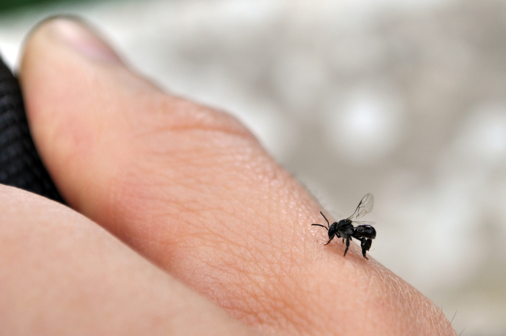 bee on thumb.JPG