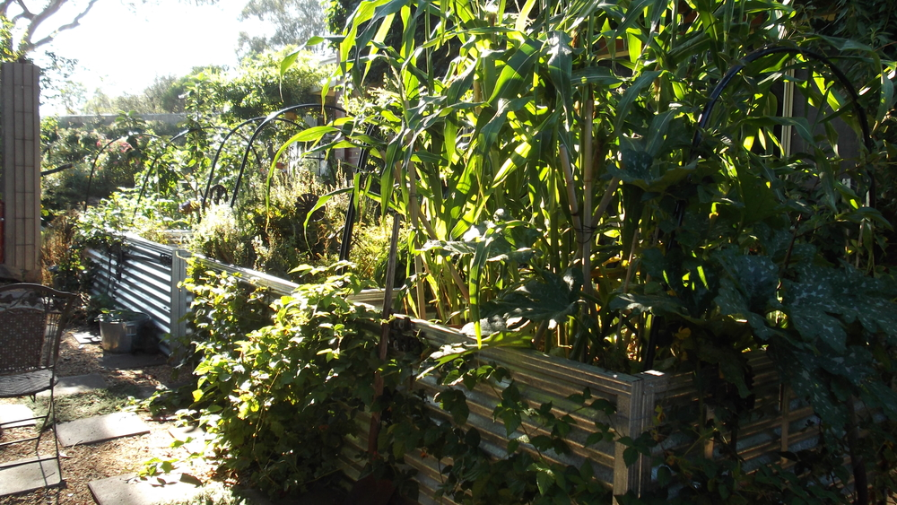 """Use all the edges"" by The Grange Permaculture Garden"