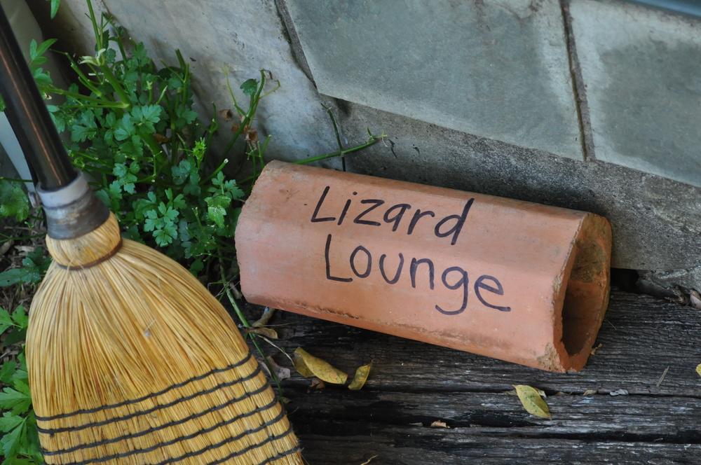 lizard-lounge.jpg