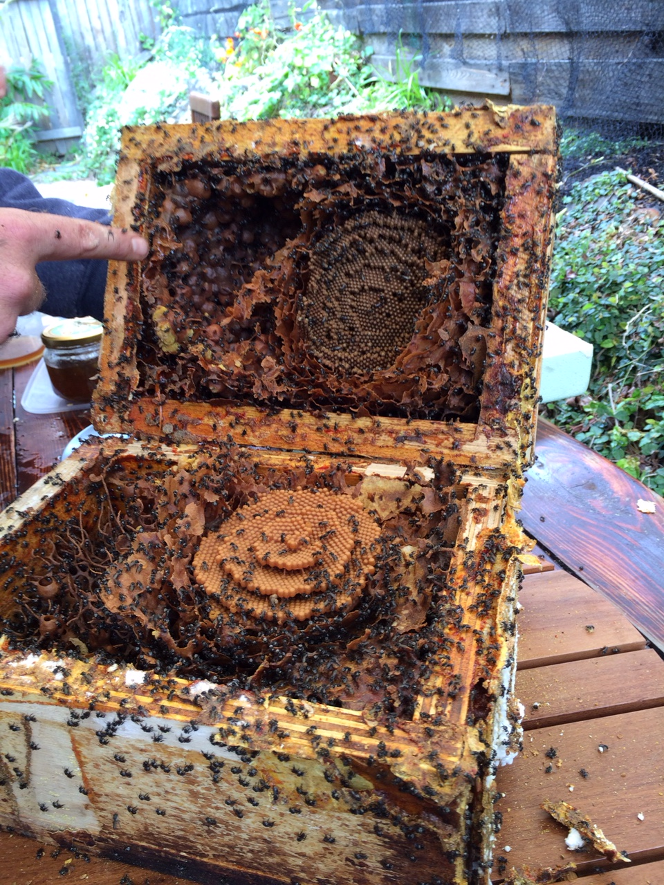 PNB native bee hive split