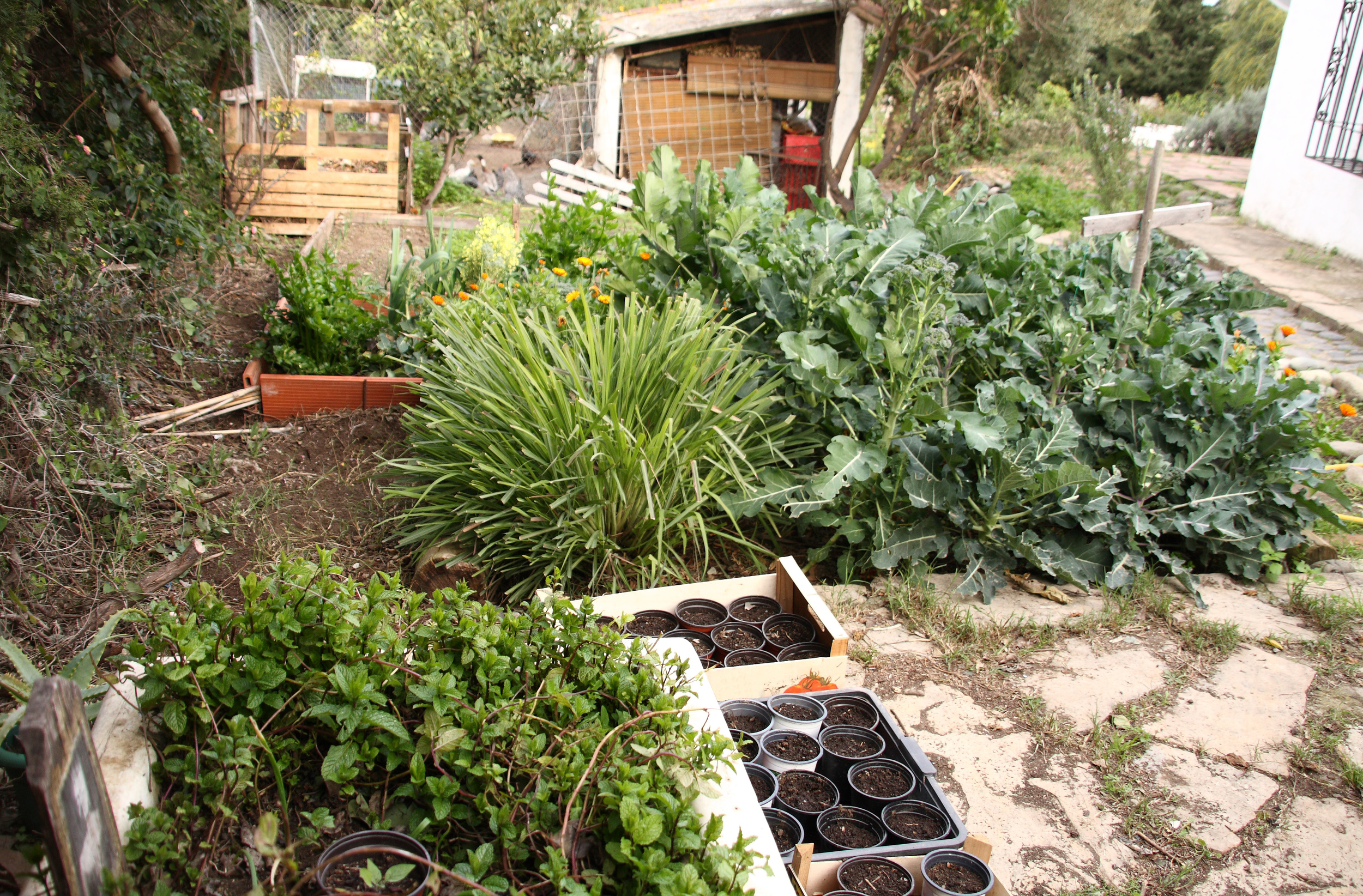 permaculture northern beaches