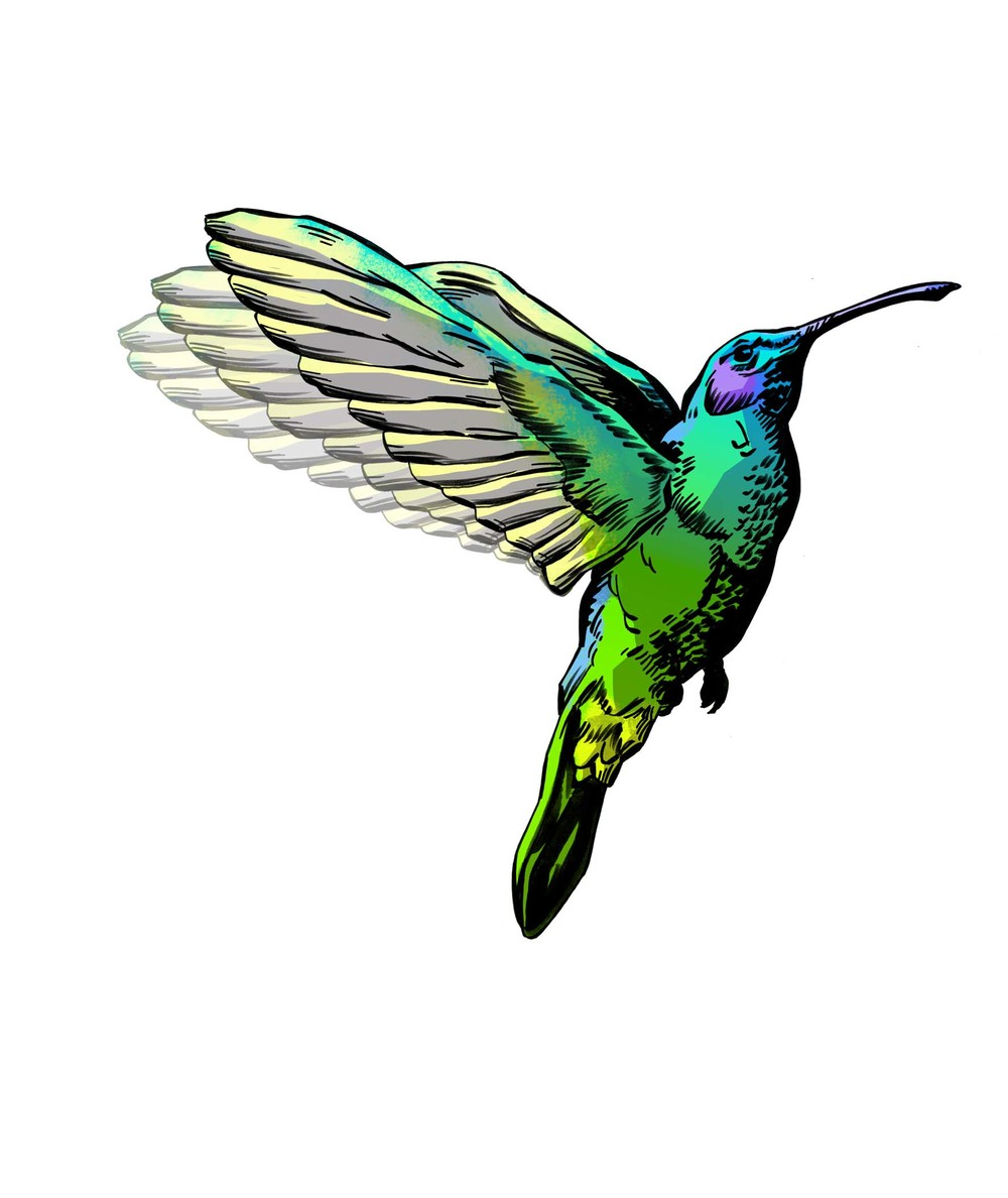 Hummingbird Amended flat aw.jpg