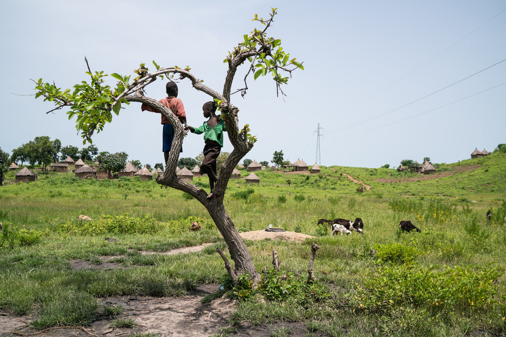 Young boys climb a tree next to the mound of sand marking one of the village wells with the highest concentration of tramadol in Guidjiba, Cameroon. Guidjiba - a village adjacent to Benoue National Park -  has become the site of debate among those researching tramadol, with some arguing the villages contaminated wells are the result of roots naturally producing the drug while others point to the large use of the drug among the local population and livestock as the cause for the drug leaching into the water supply.