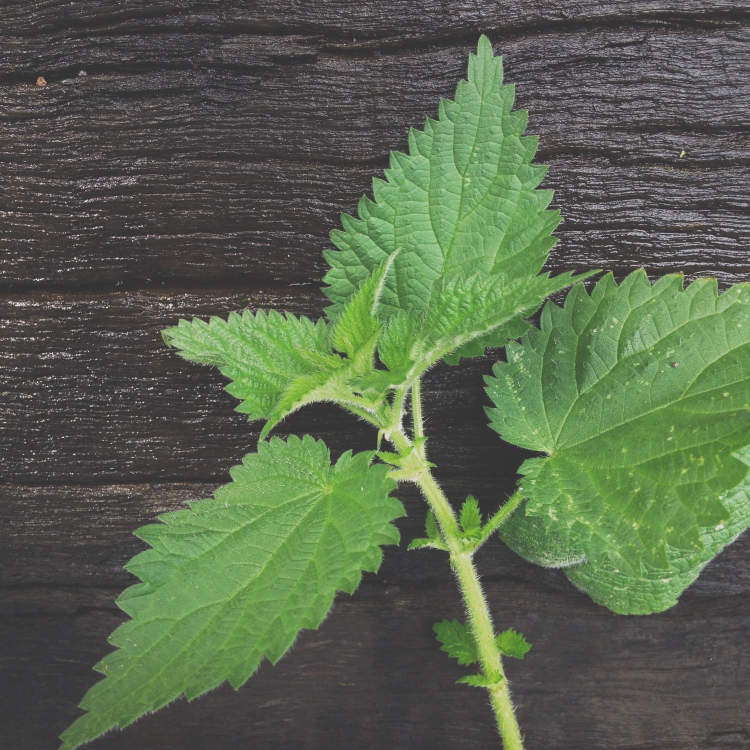 Stinging nettles are everywhere! This recipe is a way to put them to good use
