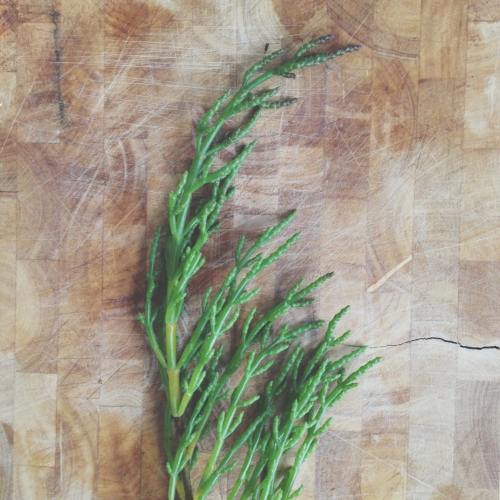 Common samphire
