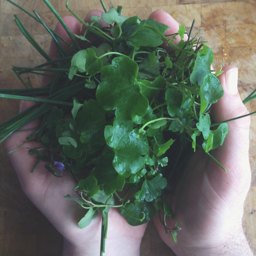 ivy leaf.jpg