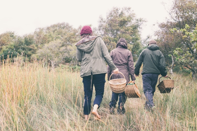 foraging and wild food courses in dorset