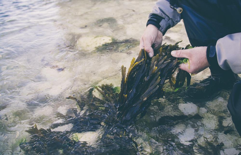 seaweed hands .jpg