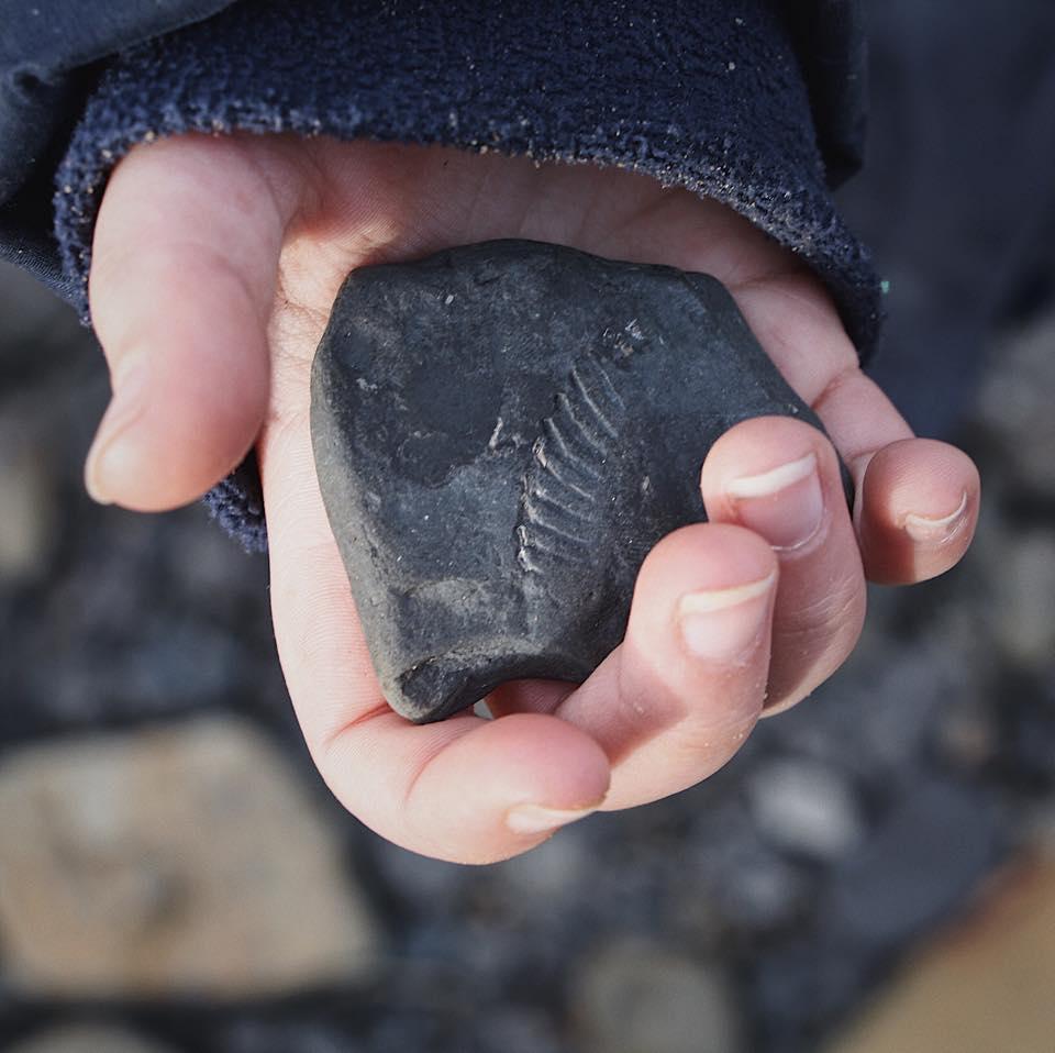molly fossil .jpg