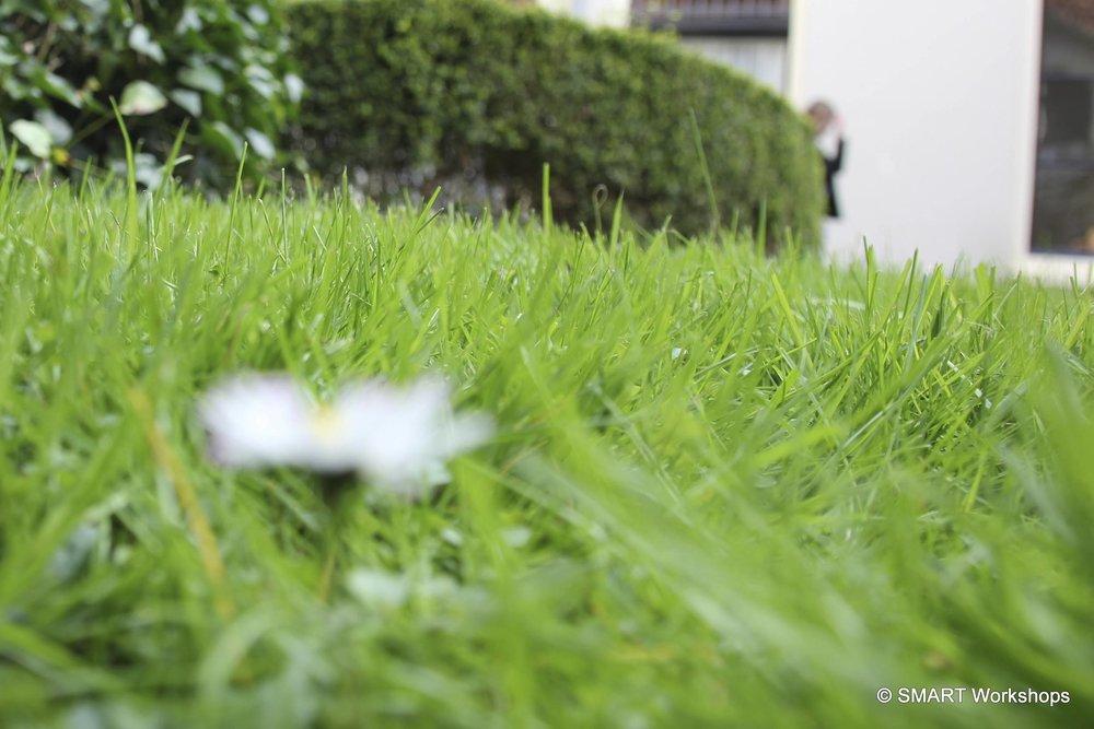 IMG_3884_crop.jpg