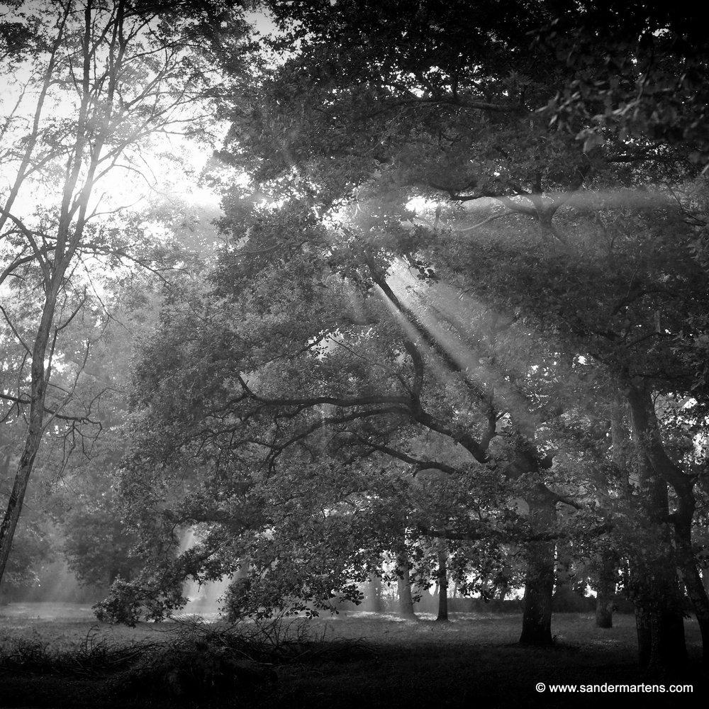 2. Alles draait om licht - Eigenlijk draait alles in de fotografie om licht.Dàt bepaalt meestal of een mooie foto ook echt goed is. Niet alleen is dat een kwestie van goed kijken, timing, en positie kiezen, maar ook de regie hebben over je eigen camera. Jij maakt de foto, niet de camera!