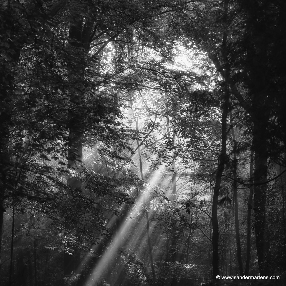 _SM_0670_crop_curves_sunlight_smoothdynamics_BW.jpg