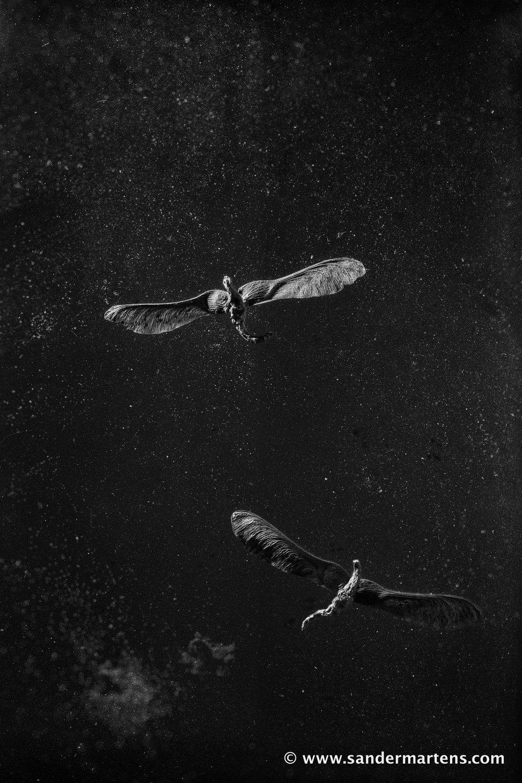 Dragonflies I