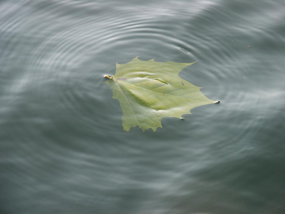 leaf-water.jpg