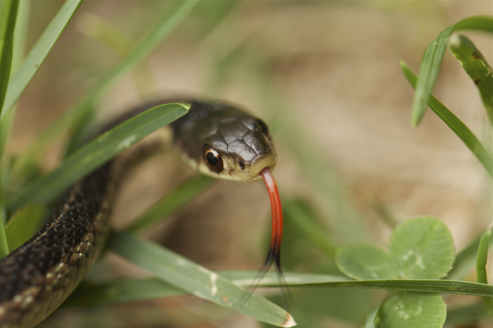 snakeinthegrass.jpg