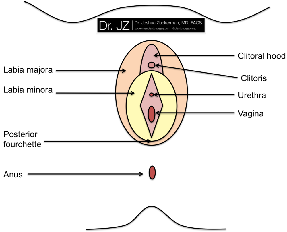 Anatomical diagram of the vagina and surrounding structures.