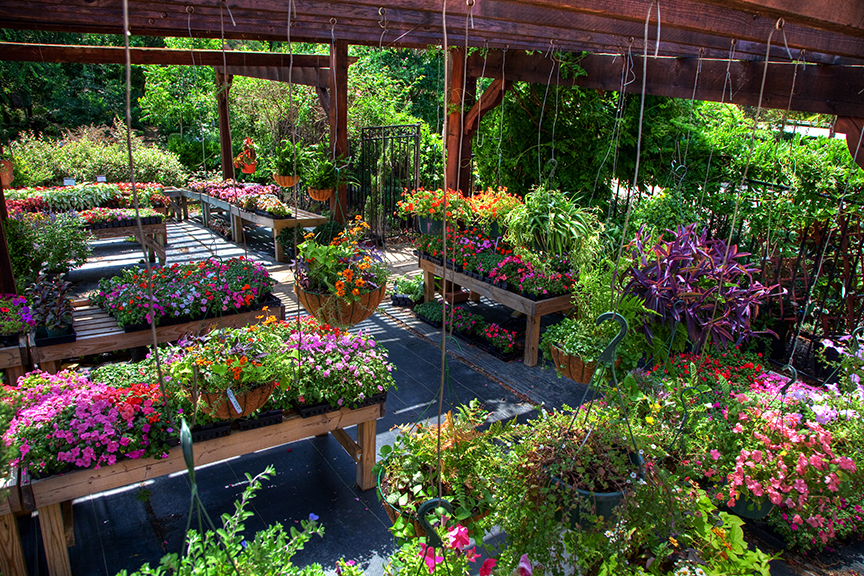Your Destination Garden Center Blooming Colors Nursery