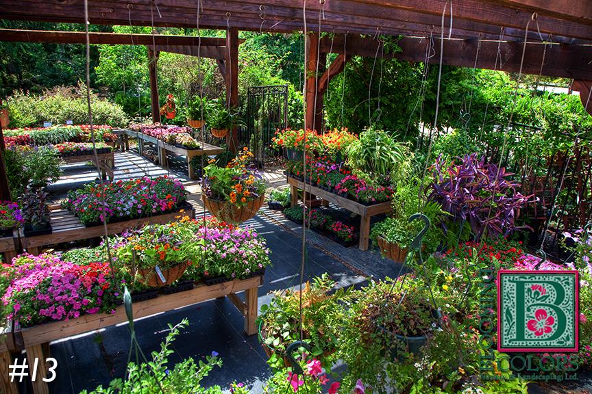 Landscape Design — Blooming Colors Nursery