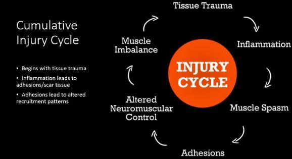 injury cycle.JPG