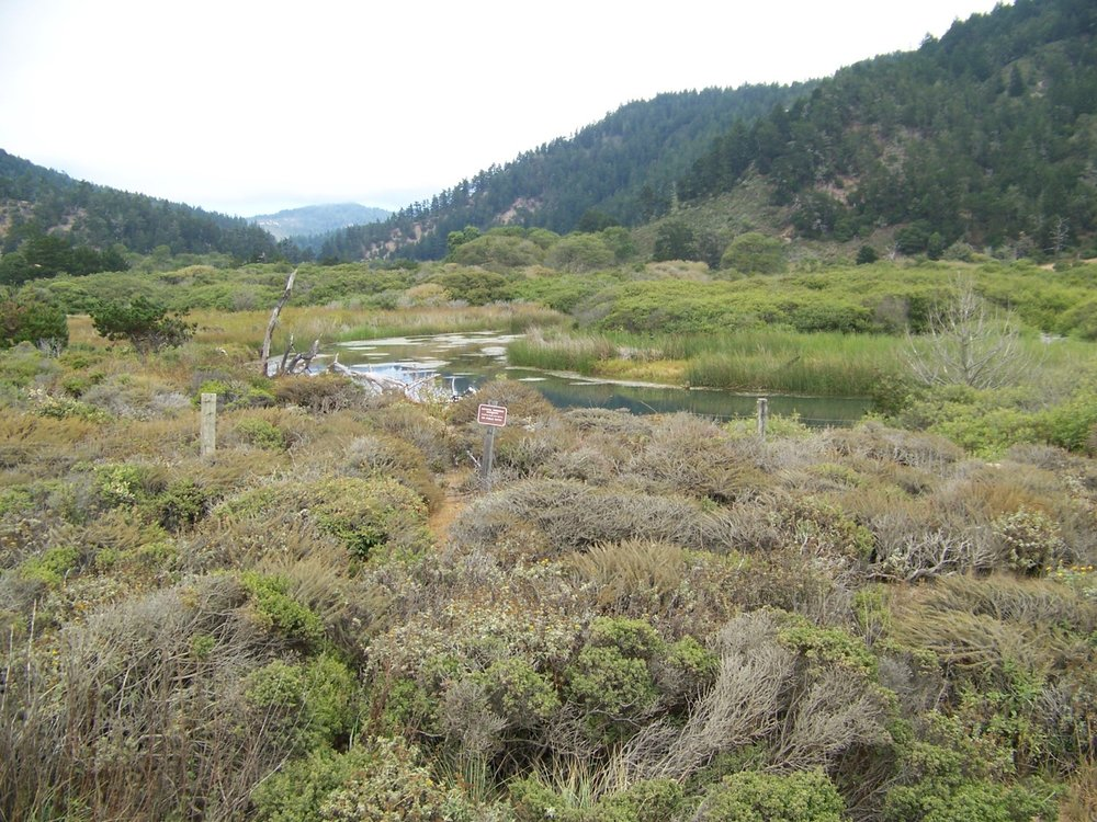 Brackish Water Marsh @ Rancho del Oso