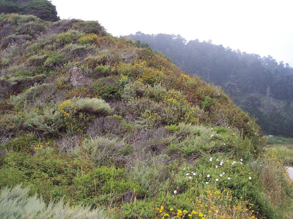 Coastal Scrub Community @ Rancho del Oso State Park