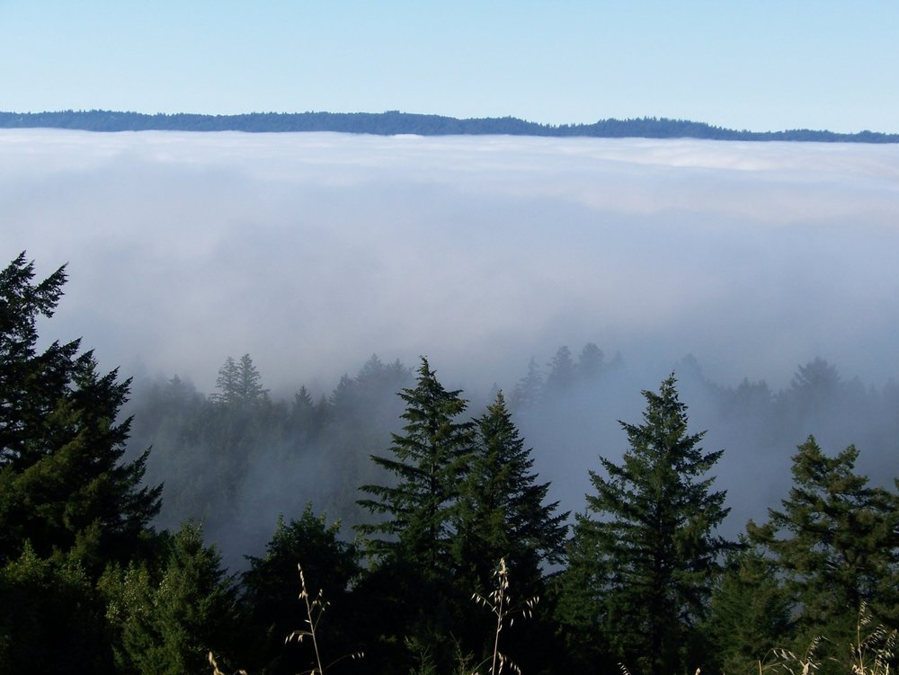 San Lorenzo Valley summer fog from Sempervirens point