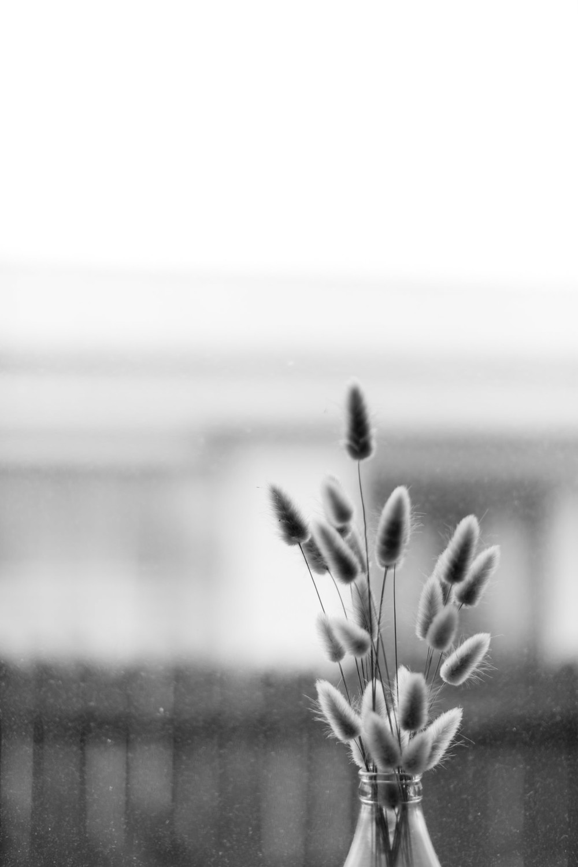 frankandpeggyphotography-0179.jpg