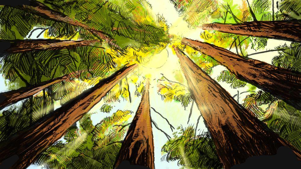 Looking up at Trees (Shot 1).jpg