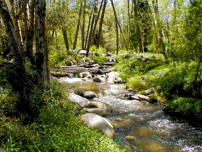 Partnership for Quality, Reliability, Sustainability - The Upper Santa Ana River Habitat Conservation Plan (Upper SAR HCP) is a collaborative effort among the water resource agencies of the Santa Ana River Watershed, in partnership with the US Fish and Wildlife Service, California Department of Fish and Wildlife, and several other government agencies and stakeholder organizations.  The purpose of the Upper SAR HCP is to enable the water resource agencies to continue to provide and maintain a secure source of water for the residents and businesses in the watershed, and to conserve and maintain natural rivers and streams that provide habitat for a diversity of unique and rare species in the watershed.  The protection of these habitats and the river systems they depend on also provides recreational opportunities for activities such as hiking, fishing, and wildlife viewing.  The Upper SAR HCP will specify how species and their habitats will be protected and managed in the future and will provide the incidental take permits needed by the water resource agencies under the federal and State endangered species acts to maintain, operate, and improve their water resource infrastructure.