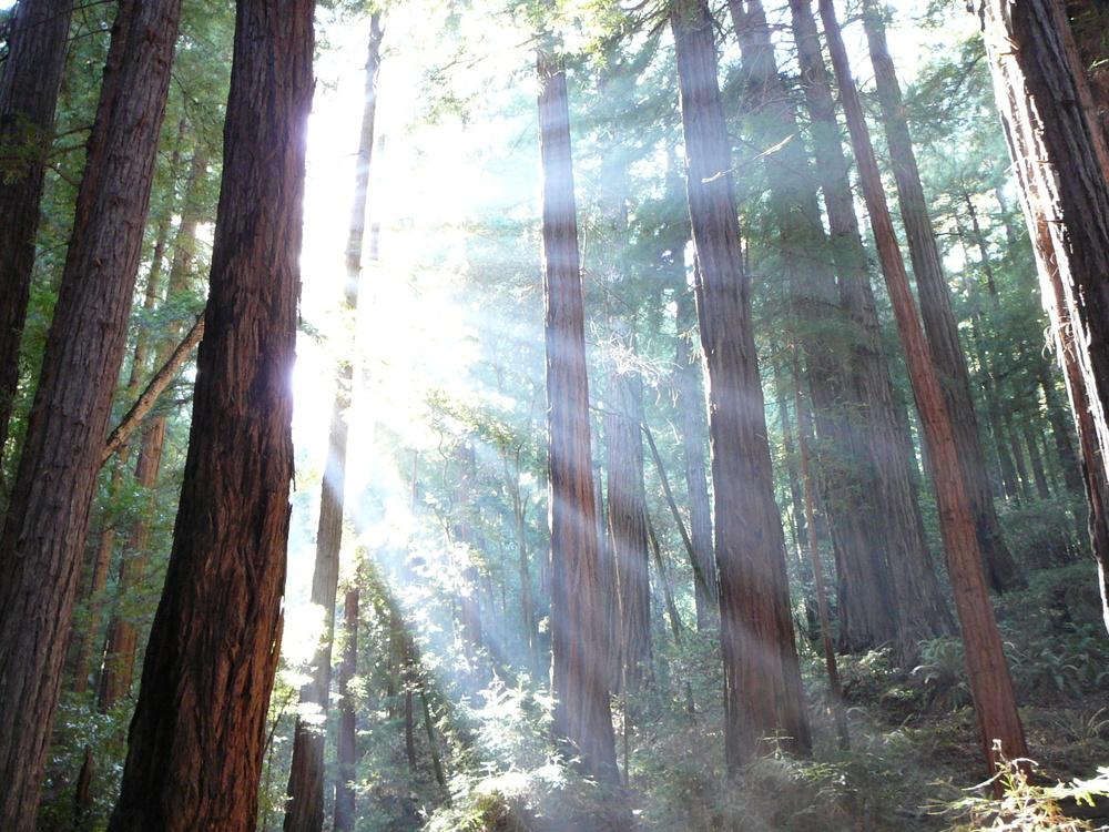 Trees_and_sunshine.JPG