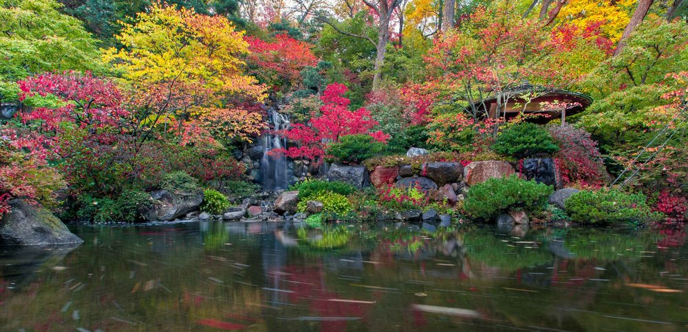 Anderson Gardens 6.jpg