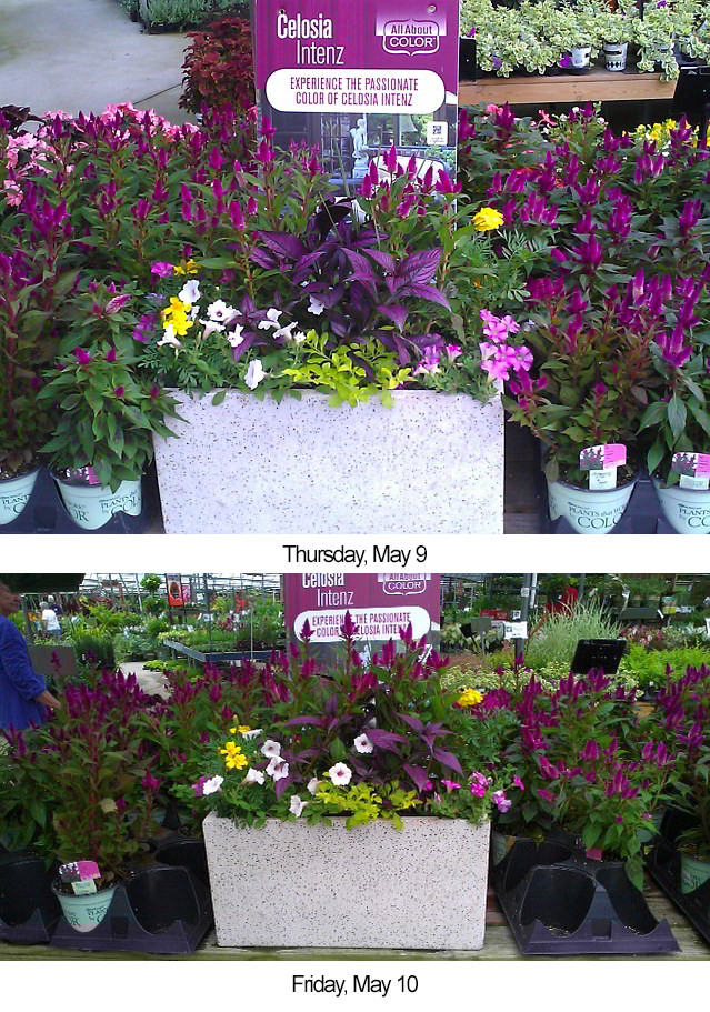 Endcap increases sales at The Family Tree Garden Center • photo courtesy of The Family Tree