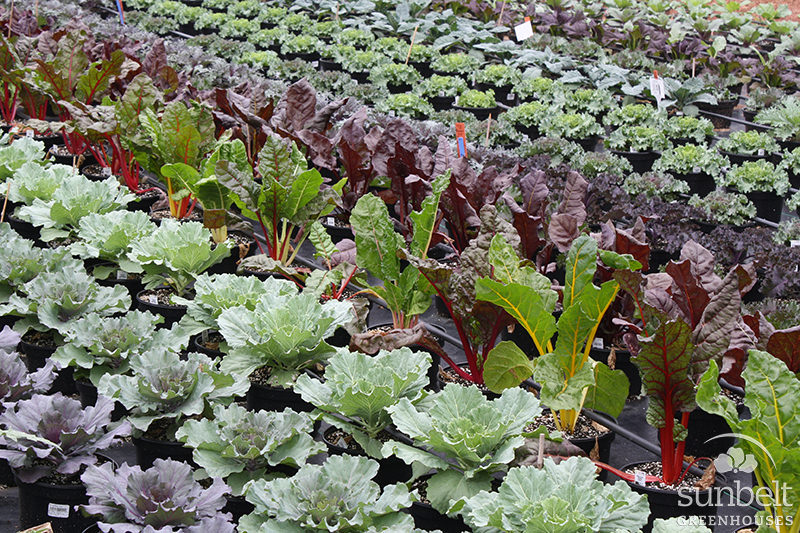 Accent Plants