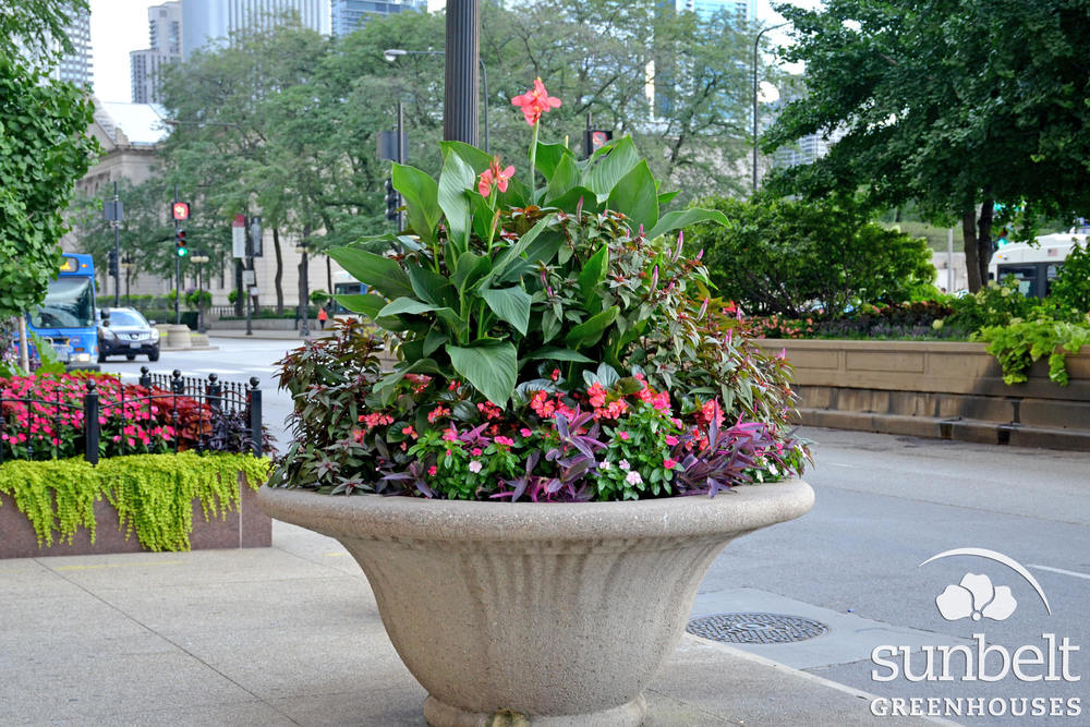 2015-08-19-chicago-landscaping-16.jpg