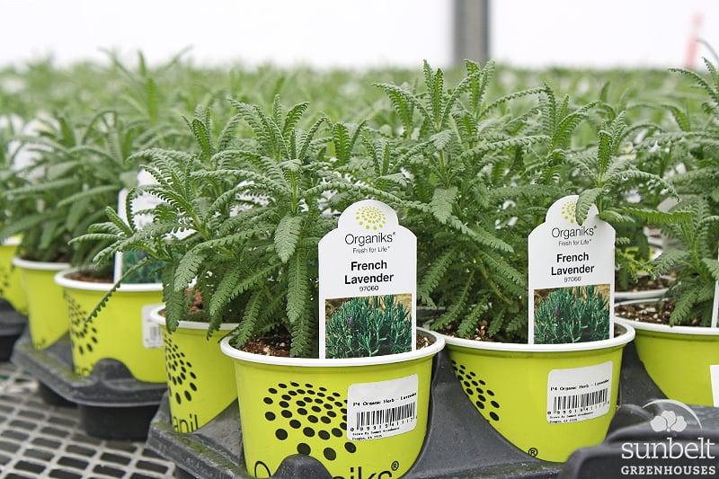 "4"" Organiks™ Herb"